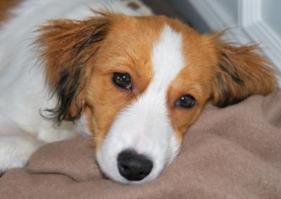 Wilma - der Schulhund